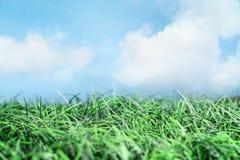 Зеленая трава и красивое голубое небо с облаками стоковые фотографии rf