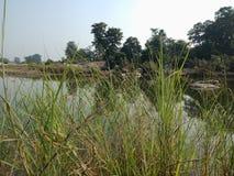 Зеленая трава и танк с деревьями и небом, предпосылкой ландшафт, обои, предпосылка стоковое фото