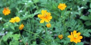 Зеленая трава и цветки Стоковое Изображение RF