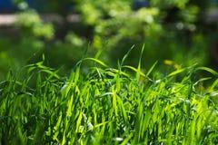Зеленая трава лужайки Оно загорено лучами солнца Стоковое Фото