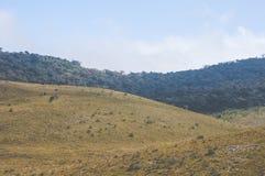 зеленая трава на горах стоковое фото rf