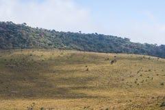зеленая трава на горах стоковые изображения