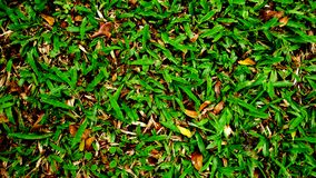 Зеленая трава на дворе Стоковое Фото