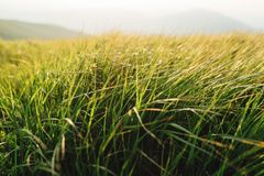 Зеленая трава на заходе солнца Стоковая Фотография RF