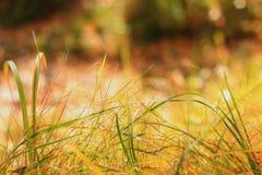 Зеленая трава на переднем плане, на заднем плане запачканная предпосылка, на солнечный летний день, место для названия, горизонта стоковые фото