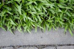 Зеленая трава на поле цемента Стоковое Изображение