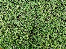 Зеленая трава на пользе поля для предпосылки текстуры Стоковое Фото