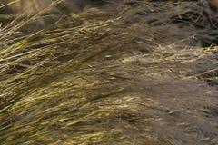 Зеленая трава на предпосылке или текстуре лета стоковое изображение rf