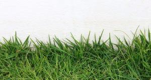 Зеленая трава на предпосылке цемента Стоковые Фотографии RF