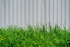 Зеленая трава на рифлёной предпосылке Стоковое Изображение RF