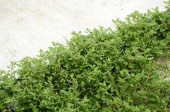 Зеленая трава около пола цемента Стоковые Фотографии RF