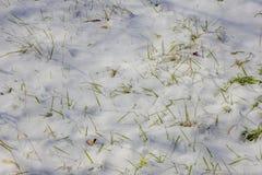 Зеленая трава покрытая с снегом в зиме Стоковые Фото
