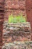 Зеленая трава растет на руинах старой крепости стоковое фото rf