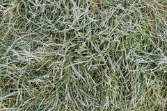 Зеленая трава с заморозком и солнцем утра морозное утро Тихая ясная погода Последняя осень или предыдущая зима Абстрактная предпо Стоковая Фотография RF