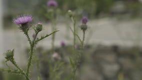 Зеленая трава с цветком в Georgia около горы видеоматериал