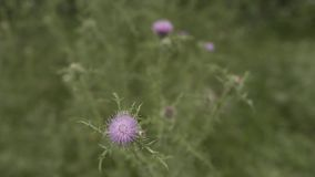 Зеленая трава с цветком в Georgia около горы акции видеоматериалы