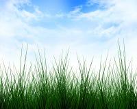 Зеленая трава Стоковая Фотография RF