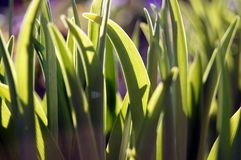 Зеленая трава  green grass royalty free stock image