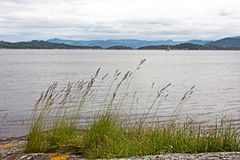 Зеленая трава silhouetted против воды Стоковые Фото
