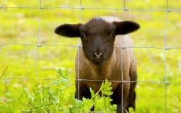 зеленая травы Стоковые Фото
