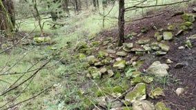 зеленая тропка стоковое фото
