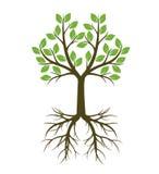 Зеленая форма дерева с корнем также вектор иллюстрации притяжки corel Стоковая Фотография
