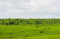 Зеленая холмообразная местность стоковые изображения rf