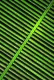 зеленая штарка Стоковые Изображения