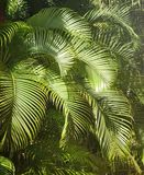 зеленеет тропическое Стоковые Изображения