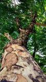 Зеленоватое дерево стоковое изображение