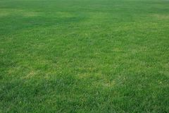 Зеленое ¼ ŒLawn ï лужайки в солнце Стоковые Фотографии RF