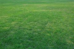 Зеленое ¼ ŒLawn ï лужайки в солнце Стоковые Изображения