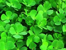 зеленое везение Стоковое фото RF