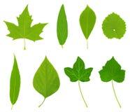 зеленое высокое разрешение листьев Стоковая Фотография