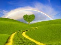 Зеленое в форме сердц дерево на луг-символе весны дня влюбленности и ` s валентинки стоковые фото