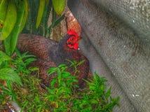 зеленое гнездй Стоковое фото RF