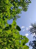зеленое густолиственное стоковое изображение