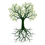 Зеленое дерево весны с листьями и корнями бесплатная иллюстрация