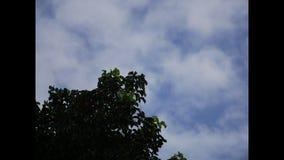 Зеленое дерево ветви с moving облачным небом сток-видео
