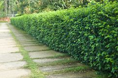 Зеленое дерево выходит вокруг дорожки парка стоковая фотография