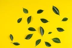 Зеленое дерево выходит картина на желтую предпосылку Стоковые Фотографии RF