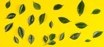 Зеленое дерево выходит картина на желтую предпосылку Стоковое Изображение