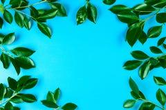 Зеленое дерево выходит рамка с голубой предпосылкой Стоковое фото RF