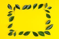Зеленое дерево выходит рамка с желтой предпосылкой Стоковая Фотография RF