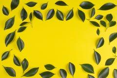 Зеленое дерево выходит рамка с желтой предпосылкой Стоковое Изображение