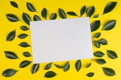 Зеленое дерево выходит рамка с пустой белой карточкой на желтую предпосылку Стоковая Фотография