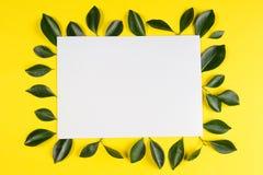 Зеленое дерево выходит рамка с пустой белой карточкой на желтую предпосылку Стоковое Изображение