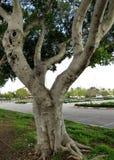 Зеленое дерево в городском ландшафте стоковые изображения rf
