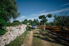 Зеленое дерево в apulia alberobello города Италии и Trullis автомобилей Стоковые Изображения
