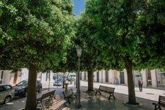 Зеленое дерево в apulia alberobello улиц города Италии Trullis Стоковая Фотография